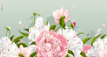 Luxurious pink and white peonies background with leaves and buds Ilustração