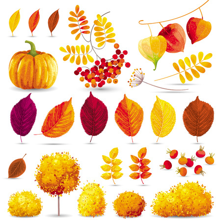 trees seasonal: Autumn leaves, trees, bushes, berries and flowers set for seasonal events and sales Illustration