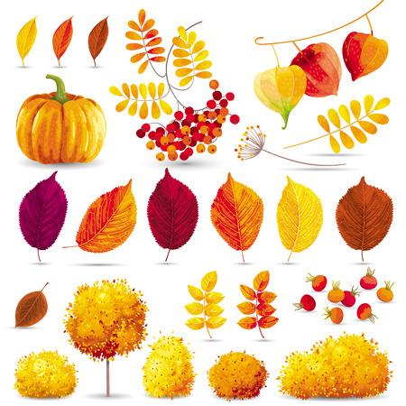 Herfst bladeren, bomen, struiken, bessen en bloemen die voor seizoensgebonden evenementen en verkoop