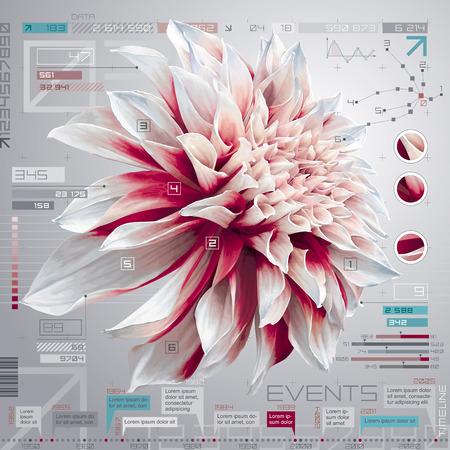 dahlia: Vector de la pantalla del ordenador digital con flor de la dalia, set de infografía y la plantilla de informe de línea de tiempo