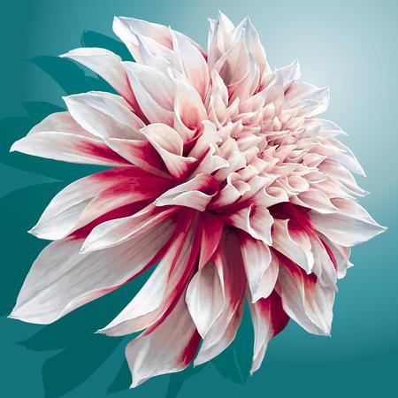 Vector dahlia flower on sea-green background