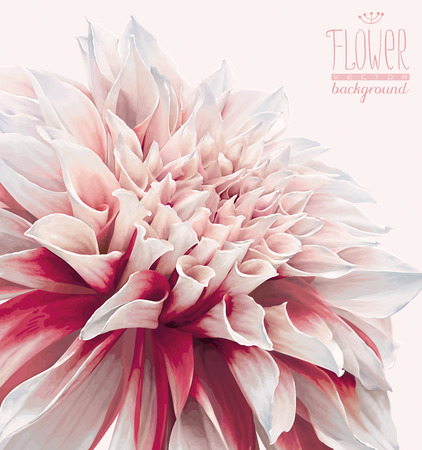 Vector dahlia flower background for Valentine's Day, wedding, events and sales. Drawn without gradient fills.