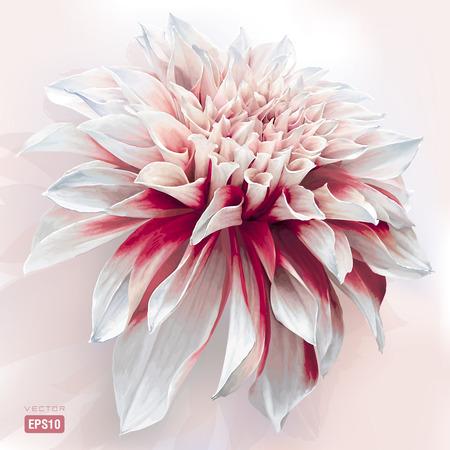 bloem luxe rood-wit tuin Dahlia geschilderd in aquarel stijl EPS10
