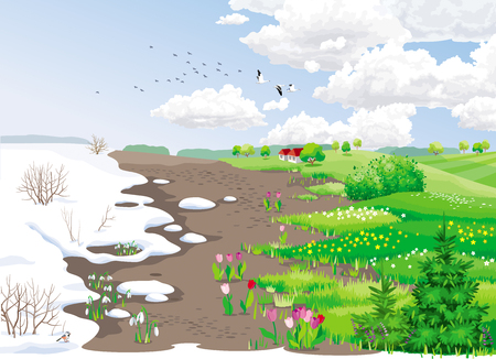 Spring rural landscape with melting snow, snowdrops, tulips and grass. Illustration