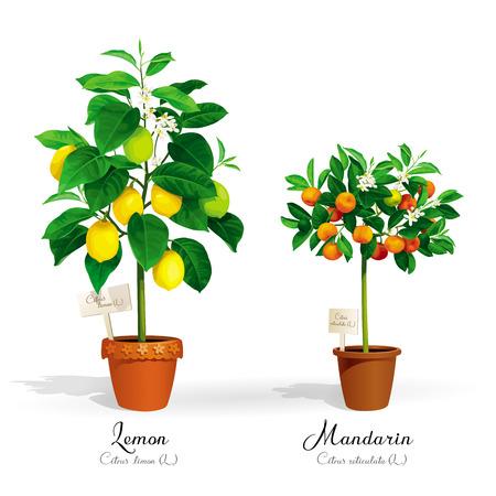 ポットとそのラテン語名の柑橘類の木々。