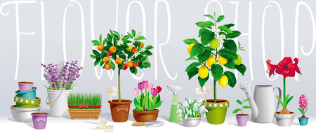 Big Collection Of The Pot Plants, Citrus Trees, Flowers And Garden Tools  Vector