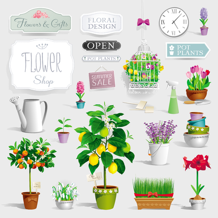 lemon grass: Big collection of the pot plants, citrus trees, flowers,  garden tools and signboards decoration of flower shop windows and showcases, banners, posters and  sales