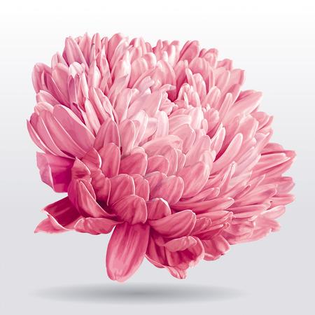 花の装飾の豪華なピンク アスターの花