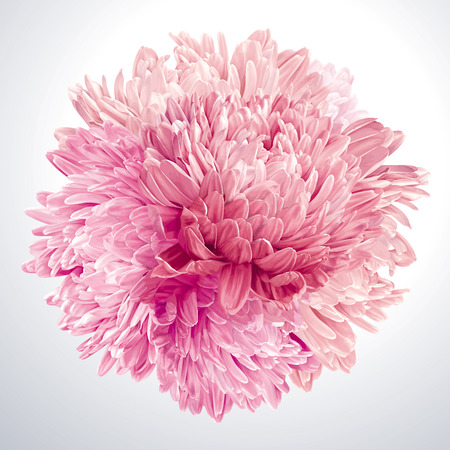 Modern floral art - Pink Asters and Chrysanthemums. Flower vector composition made in the form of a ball for wedding decoration, Valentine's Day,  Mother's Day, sales and other events