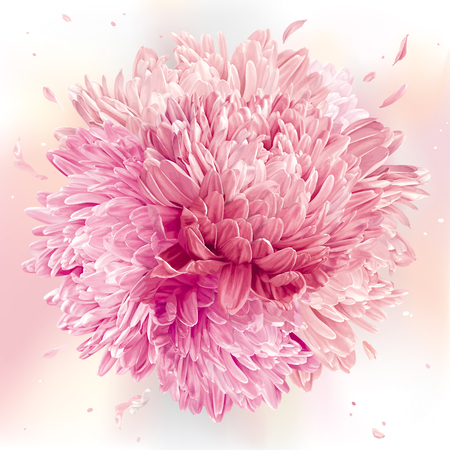 Modern floral art pink asters and chrysanthemums. flower vector composition made in the form of a ball for wedding decoration, valentines day, mothers day, sales and other events.