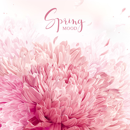 Spring pink, red and white Chrysanthemums card