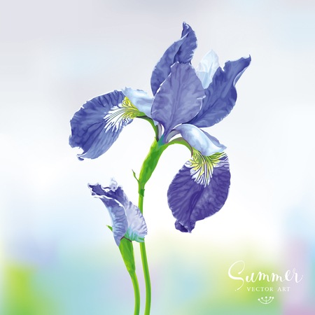 Blue Iris flower with bud on blurred background. Botanical vector drawing in watercolor style