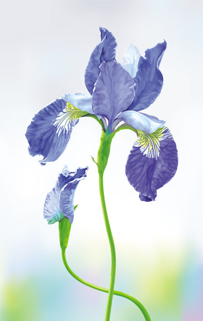Blue Iris flower with bud on blurred background. Botanical vector drawing in watercolor style for romantic greeting cards, wedding decoration, invitations, posters, banners, spring and summer sales.