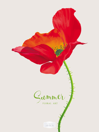 Luxurious bright red vector Poppy flower for floral decoration drawing in watercolor style Ilustrace
