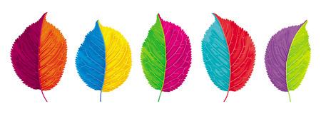 Vector set of brightly colored leaves for summer and autumn decoration Ilustração