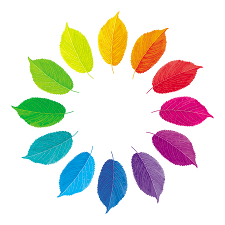 Vector color wheel made from multi-colored leaves