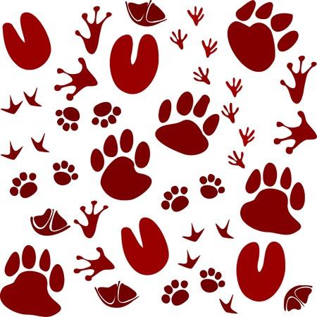 白い背景に分離された動物の足跡トラック ベクトル図