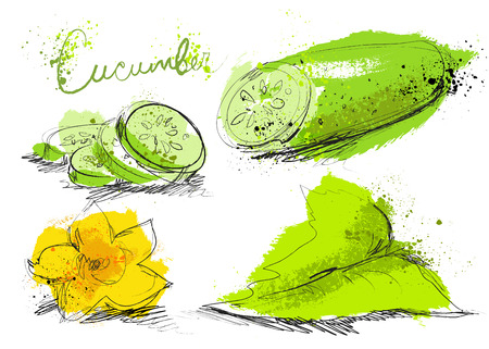 Cucumber slices isolated on white background, art hand draw style with ink texture