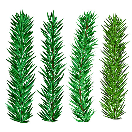Set of spruce and fir tree branches - christmas elements for realistic design and brushes