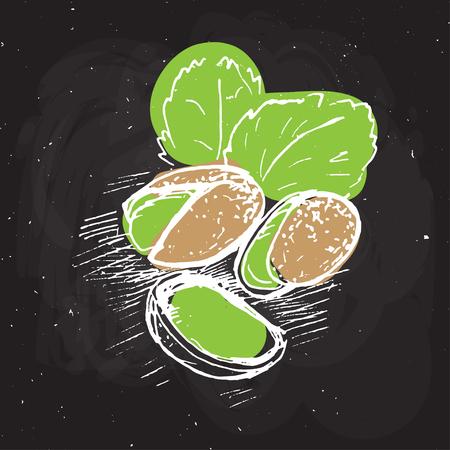 피스타치오 벡터 손 그리기 그림입니다. 검은 분필 보드에 피스타치오를 스케치합니다. 피스타치오 잎