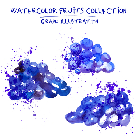Set of watercolor grapes vector illustration. Splashed hand draw grapevine isolated on white background, art vector grape objects. Grape and grapewine element with watercolor splash, cut out, blue colors