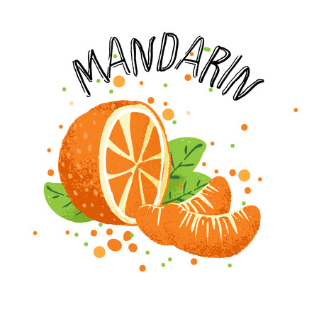 Vector hand draw orange mandarin illustration. Slice of orange tangerine with juice splashes isolated on white background. Textured mandarins citrus sketch, juice citrus fruit with word Mandarin