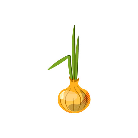 Fresh juicy onion - vector icon isolated on white background. onion icon, flat style, vegetable vector illustration. Healthy food single object - isolated onion