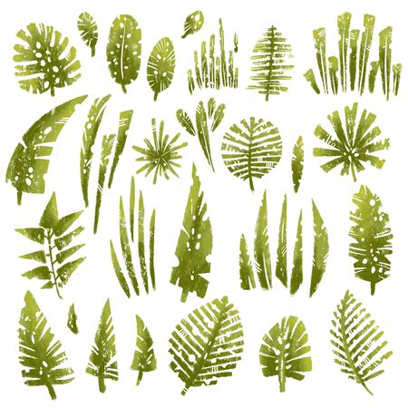 Tropical textured leaves set with expressive grunge texture. Isolated elements collection on the white background. tropical palm and jungle leaves, split leaf, philodendron leaves in one set