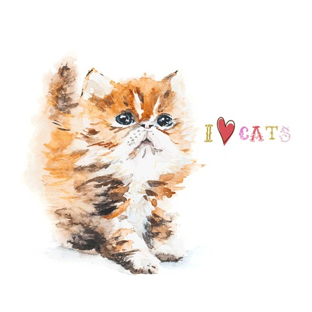 little red house cat with fluffy fur on white watercolor background in the style of hand-drawing Vector