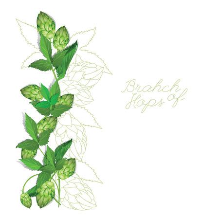 hop plant: Hops Illustration. Isolated background.