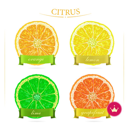 Set of citrus for food design. Fruits. Vitamin C. Orange, grapefruit, lime, lemon. Illustration