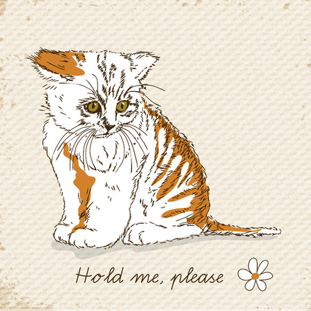 miss: Poster with sad cat