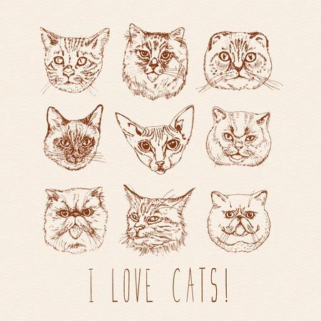 siamese: Satz von Katzen. Rassen. Siamese, British, Siberian, Persisch, Scottish Fold, Maine Coon, Bengalen, Sphynx in doodle hipster Vintage-Stil.