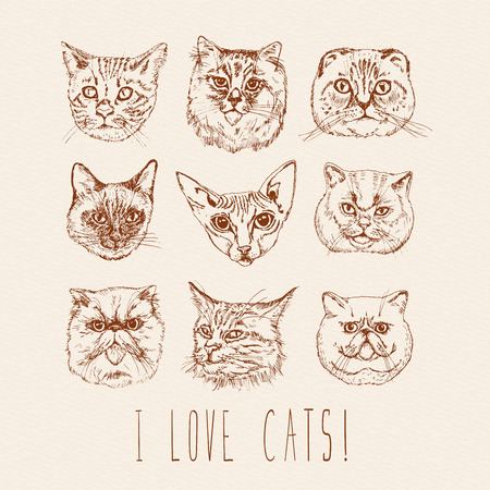 coon: Set of cats. Breeds. Siamese, British, Siberian, Persian, Scottish Fold, Maine Coon, Bengal, Sphynx in doodle hipster vintage style.
