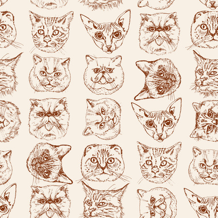 coon: Seamless pattern with cats Siamese, British, Siberian, Persian, Scottish Fold, Maine Coon, Bengal, Sphynx in doodle hipster style. Illustration