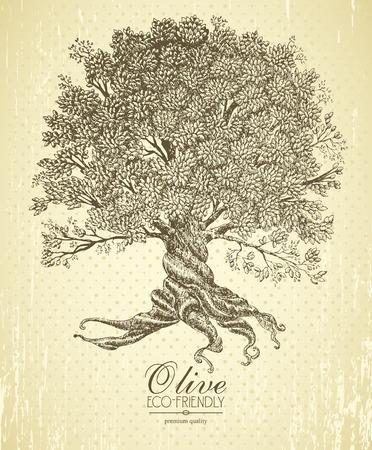 boom: Olijf boom met wortels op ruwe achtergrond. As dag poster in vintage stijl.