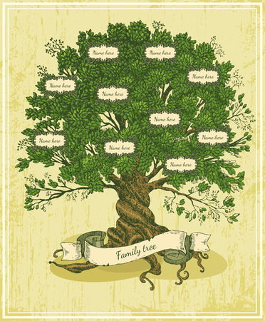 pedigree: Genealogical tree on old paper background. Family tree in vintage style. Pedigree