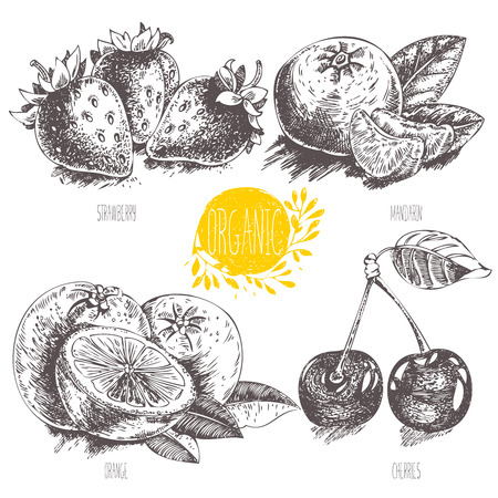 mandarin orange: Series - vector fruit, vegetables and spices. Hand-drawn illustration in vintage style. Sketch. Healthy food. Linear graphic. Set of strawberry, cherry, mandarin, orange. Illustration