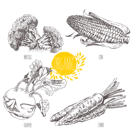 Series - vector fruit, vegetables and spices. Hand-drawn illustration in vintage style. Sketch. Healthy food. Linear graphic. Set of corn, carrot, broccoli, kohlrabi