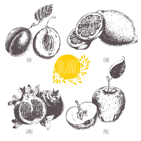 Series - fruit and spices. illustration. Sketch. Healthy food. Linear graphic. Set of lemon, apple, plum and garnet