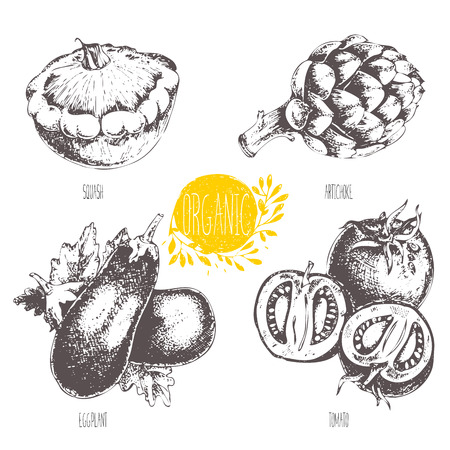 courgette: Series - fruit and spices.  illustration. Sketch. Healthy food. Linear graphic. Set of artichoke, tomato, eggplant, courgette. Illustration