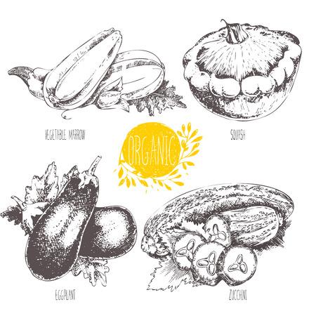 médula: Serie - frutas y especias. ilustración. Bosquejo. Comida sana. gráfico lineal. Conjunto de calabaza, calabacín, berenjena y calabacín.