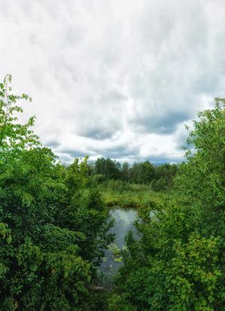 Forest river. Woodland bog. Summer landscape