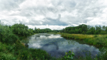 Forest river. Woodland bog. Summer landscape