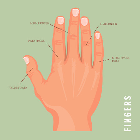 5 names of fingers. Vector poster with human hand. Isolated background. Stock Illustratie