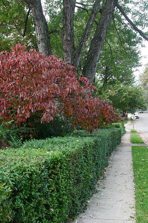 shady: A sidewalk in a shady suburban neighborhood, with fall colored foliage. Stock Photo