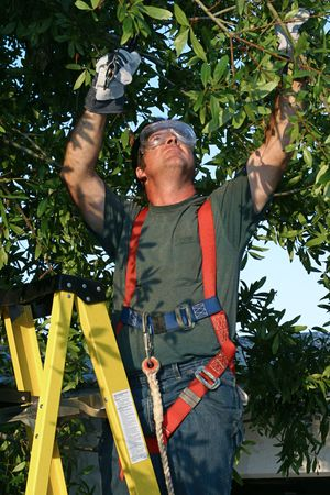A man in safety gear, standing on a ladder trimming a tree.