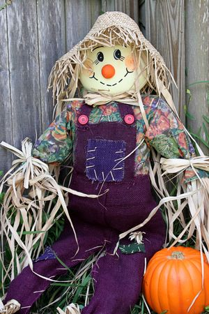 A scarecrow sitting in a garden, leaning against a wood fence. He has a pumpkin beside him. Stock Photo