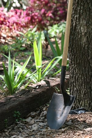 A gardening shovel leaning against a tree with a garden in the background.  Railroad tie garden border.