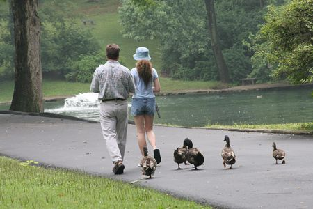 waddling: A father and daughter in a park with a group of ducks waddling behind them